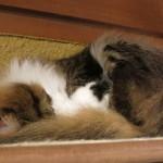 猫の時間 - ただいまお昼寝中