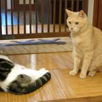 猫の時間 - 出入口でお客様をお見送り