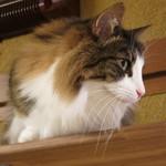 猫の時間 - 外の選挙演説の声で目が覚めた!