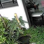 白玉饅頭 元祖 吉野屋 - 店の外には小さな水辺が風流。