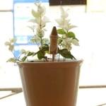 コアンドルー - 窓辺の植木鉢
