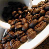 コーヒーマーケット - パナマ ベルリナ農園 ピーベリー