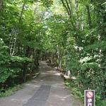 20411246 - 売店の向こうは『青木ヶ原の林道』