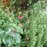 マーサーブランチ - 草花が植えてあります