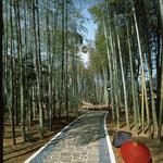 新井旅館 - 緑鮮やかな竹林