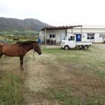 西表島 グリーンファーム 猪狩家 - 馬が一頭います