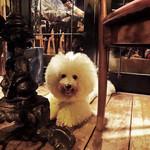 ALMA - 犬は外のテーブルの下で・・