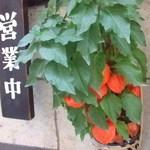 大正浪漫 黒船屋 - 伊香保の夏はどこも鬼灯飾るそうです。