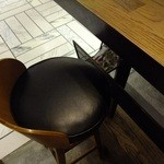 パリヤ アンド ボンジュールブラウンウォーター - 椅子