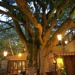 20799734 - テラス席にある大きな木