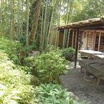 嵯峨野 - 竹林が涼しげ♪