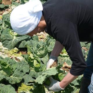 秋山農園の京一さんが育てる野菜