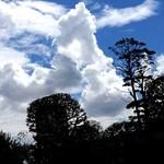 天の勢 地球カレー - これが竜巻になるのかもしれない。龍ならず。