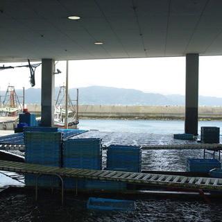 明石浦漁港直送のたこや新鮮な魚介類が豊富!