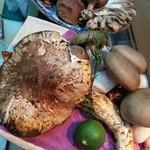 志乃家 - 松茸など色々のキノコを使った料理を用意しています。