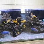 津の田ミート - 近くにミニ水族館があります