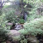 水琴茶堂 - 店内から見える中庭には滝が