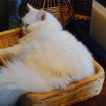 デイ バイ デイ Ⅱ - 猫ちゃんいます。