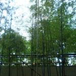 麓屋 - [内観] カウンター席からみる竹林 ①