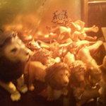 ライオン堂 - ライオン堂のライオンちゃん達♪