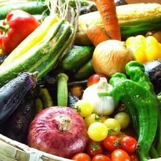 野菜にこだわる。