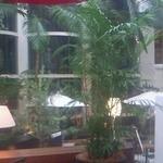 Terassa - イムズ12階の吹き抜け。植物だけじゃなく木まであって雰囲気抜群です