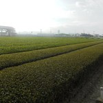 夢茶房 - お店の前に広がる茶畑。