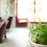 グラウンド ワーク - 紅茶や照明器具等の雑貨、多肉植物の販売も行っています