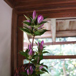 宝泉院 - 廊下のあちらこちらに、活け花や飾りがあります