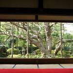 宝泉院 - これを撮るには、朝9:00しかありません、五葉の松を見る、額縁庭園