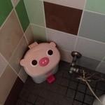 コブタ - トイレにも豚