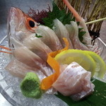 山陰旬華 新鮮組  - 山陰宝魚のどぐろ。底引き漁のある期間のみ入荷。お造り、塩焼、煮付けどれも絶品です