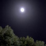 シンガポール シーフードリパブリック - 明るい月夜〜♬