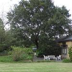 ドリプレ・ローズガーデン カフェ - 大きな榎が木陰を作るテラス