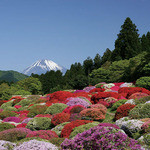 つつじの茶屋 - 庭園からは富士山が見えます。