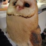 フクロウのみせ - メイフクロウ