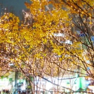 定禅寺通りのケヤキ並木を眺められるロケーション