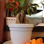 洋食家がじゅまろ - がじゅまろ由来の鉢植え(店内)
