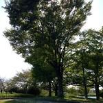 22205814 - 暖かな陽射しと木陰の木漏れ日が◯