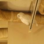 cafe doudou - 店内には幸福の白フクロウが居ます!!