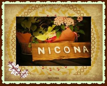 ニコナ name=