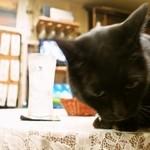 村田屋酒店 - 黒ネコと乾杯!!