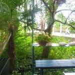 2250123 - 窓から見える小川の緑