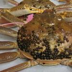おくどさん 小柴 - 11月解禁『松葉ガニ』!新地まで運びます。ブランド【柴山港産】タグ付き蟹料理をご賞味下さい