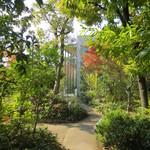 司馬遼太郎記念館 カフェコーナー - 雑木林の庭のやまもみじも色づき始めていました。