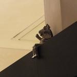 シターラ - こんな高い所にお座りしてる!かわいい♪