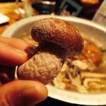 きのこの里 - キノコ鍋についてくるキノコ狩り。とっても香りのいい椎茸