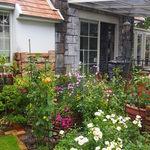 けやきの森 - バラの咲く庭