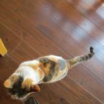 エランズカフェ - 近所の猫もお出迎え。