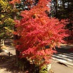 22703079 - 窓から美しい紅葉が眺められる。